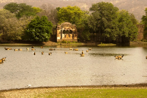 Large Photograph of HOTEL SAIF  RANTHAMBHORE located in Ranthambore